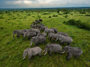 ELEPHANTS - GREEN