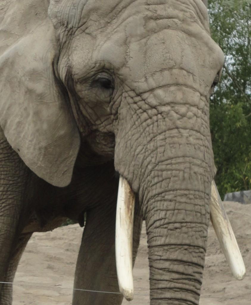 ZOO - ELEPHANT 21