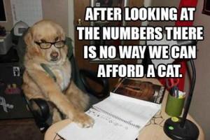 Funny doggie