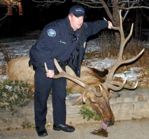 Police KIll Gentle Elk
