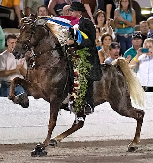 the significance of the walking horse breed to the history of tennessee Animal rights groups say tennessee walking horses' distinctive high making sure those walking horses aren't hurting horses no other breed.