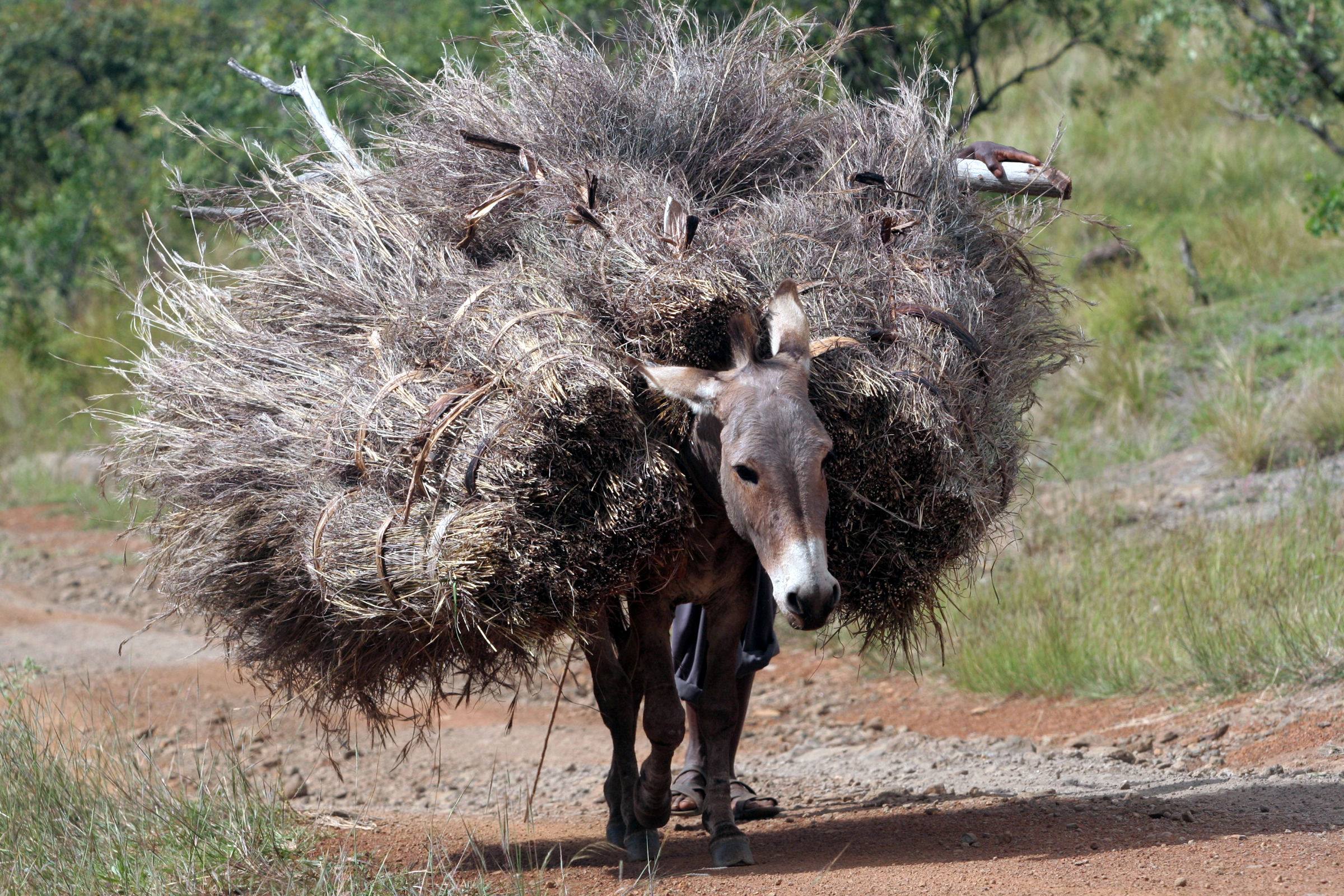 DONKEY WORKING