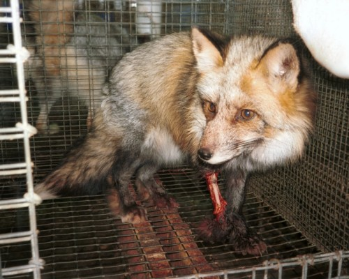 FUR FARM - CHINA 3