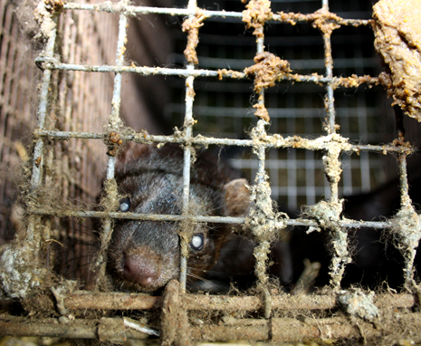 FUR FARM - CHINA 5