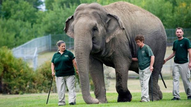 Lucy the lone Edmonton Zoo elephant