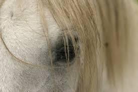 HORSE EYE - 2