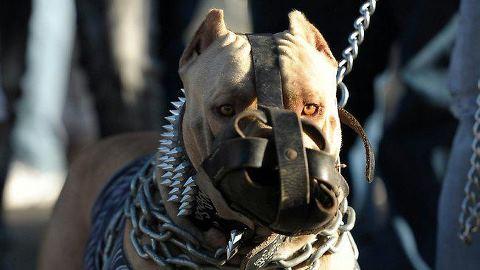DOG FIGHTING - MISSISSIPPI