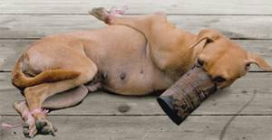 DOG MJEAT TRADE - PHILIPPINES