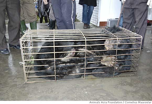 bear crush cage