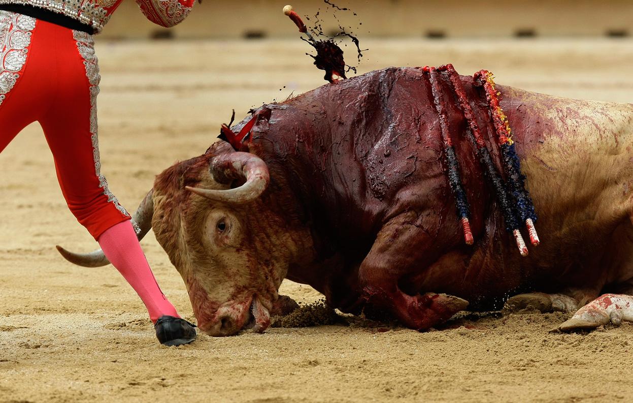 bull fight - the kill