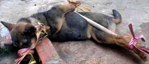 Bali Street Food Dog
