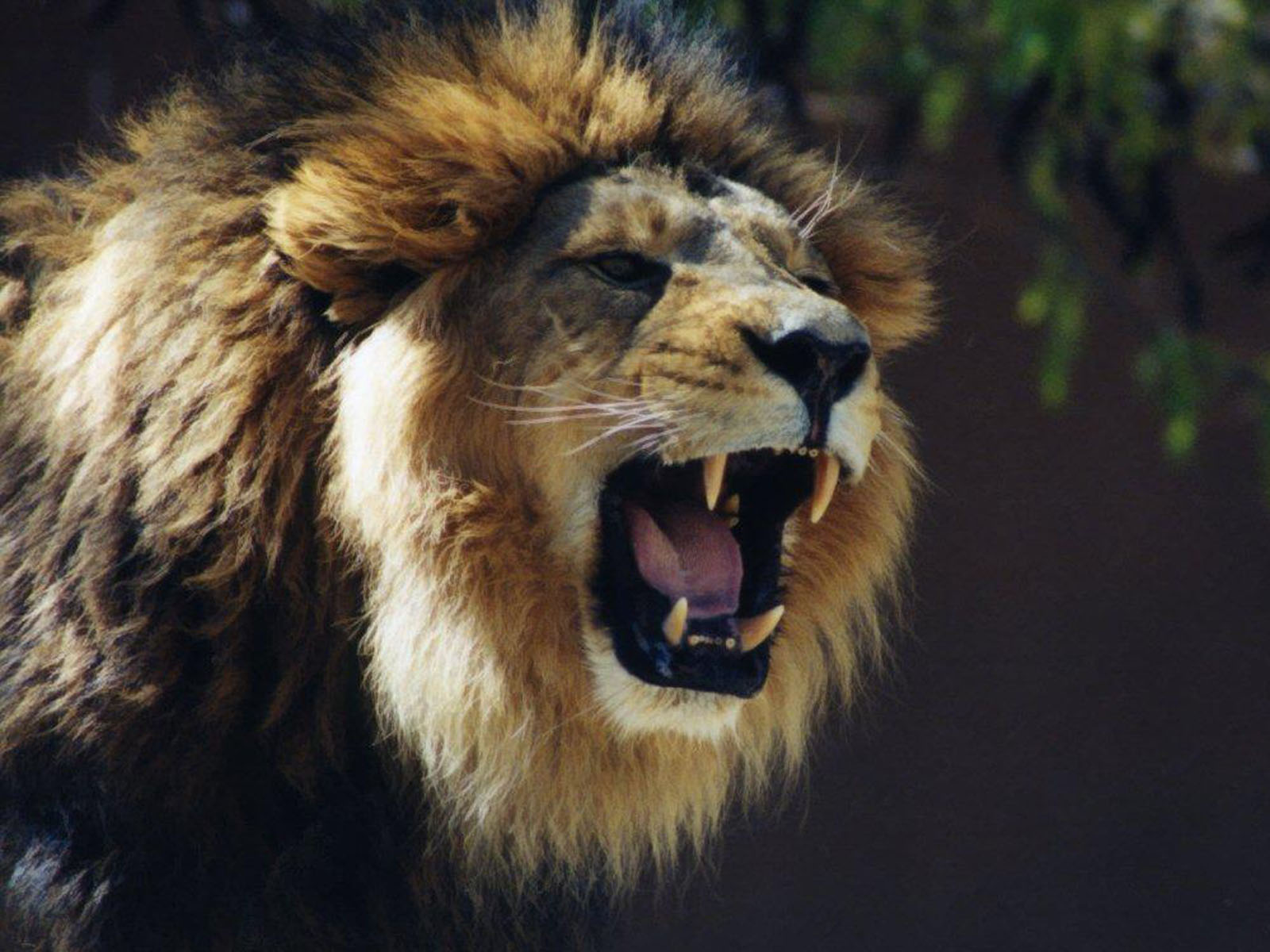 Why Are We Marching For Lions?Creating Animal Awareness