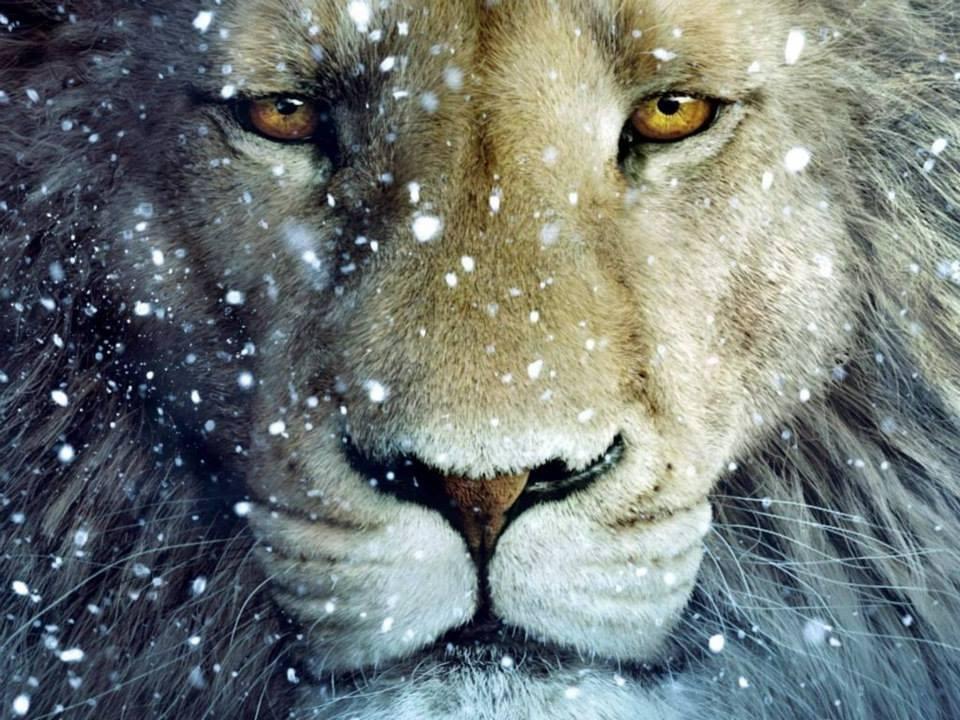 LION 48