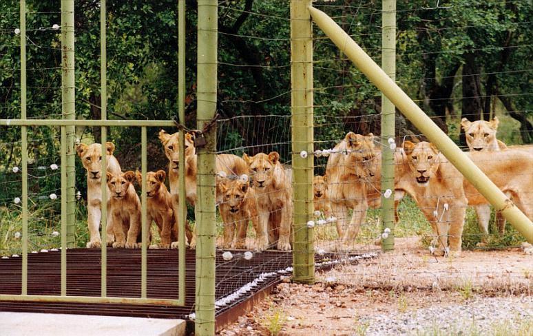 LION FARM
