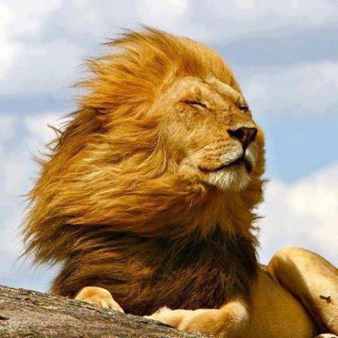 LION  57