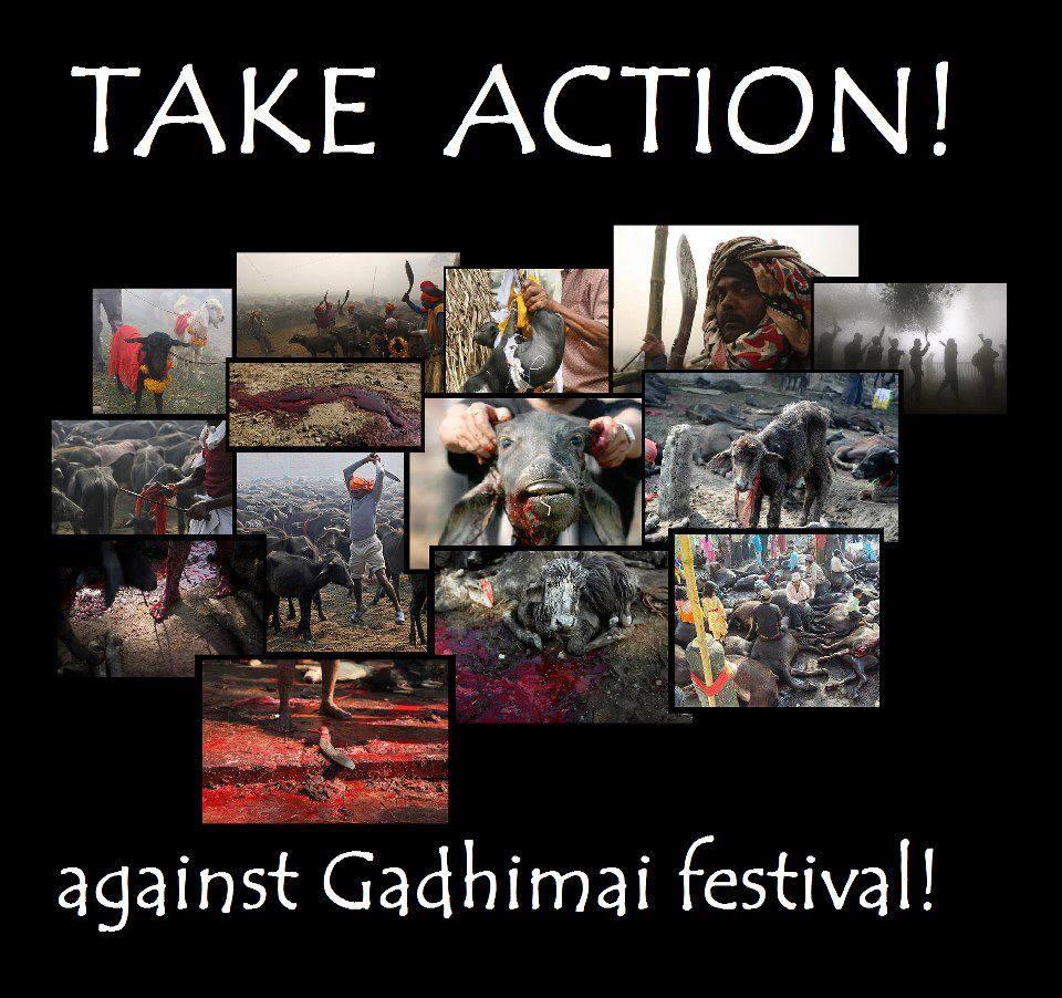 NEPAL - GADHIMAI FESTIVAL - NOVEMBER