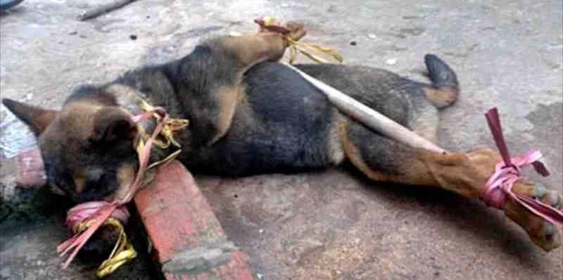 Vietnam Cat Dogs Rescue