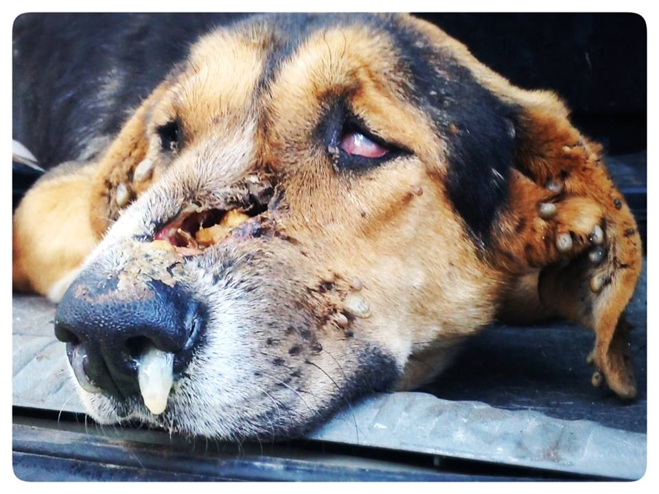 Why Do People Abuse And Kill Animals - Part 1Creating Animal Awareness