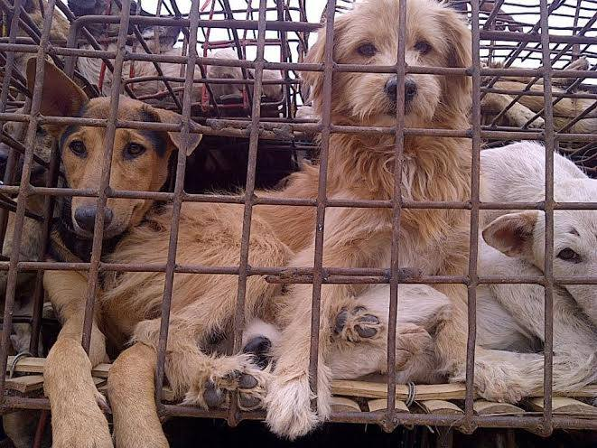 DOG - MEAT TRADE