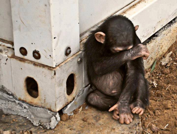 Why Do People Abuse And Kill Animals - Part 2Creating Animal Awareness