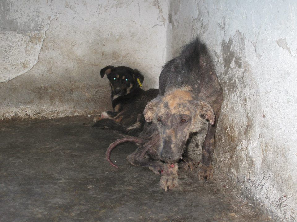 DOGS - ROMANIA 2