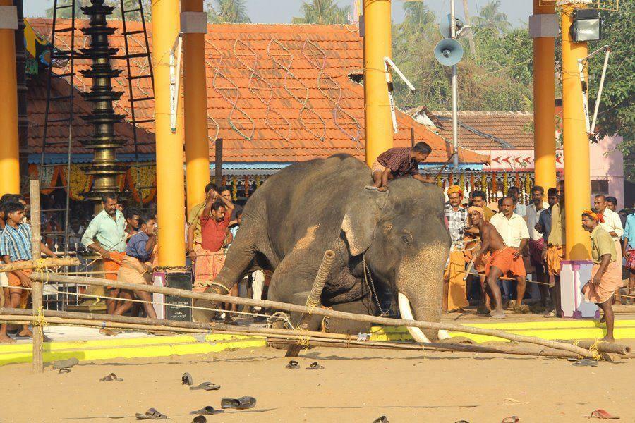 ELEPHANT - WORK