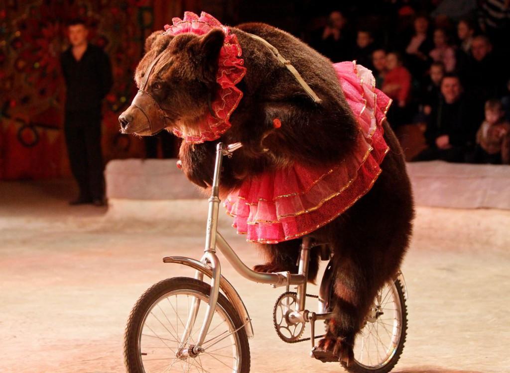 ANIMAL - CRUELTY BEAR