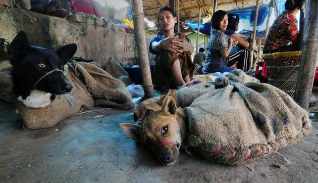 ANIMAL - CRUELTY DOG MEAT RRADE