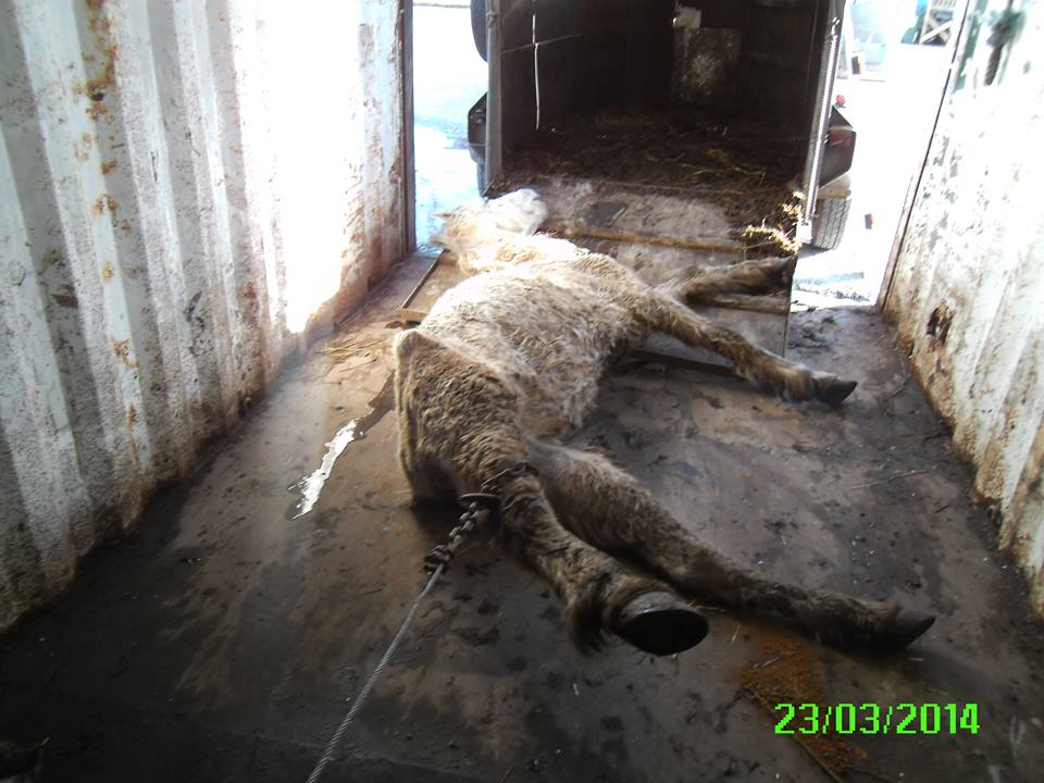 Animal Abuse Horses Animal Cruelty Horse