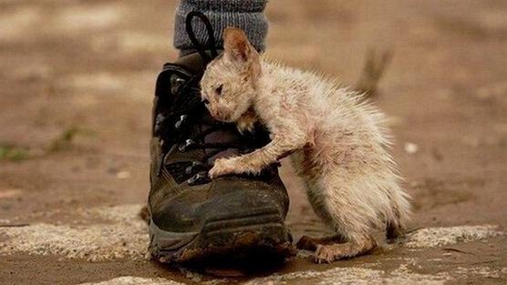 ANIMAL - CRUELTY KITTEN