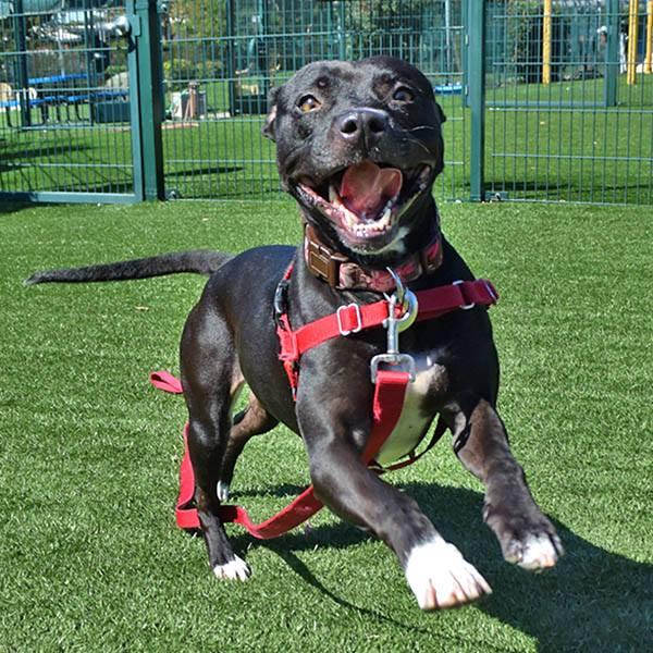 DOG - HAPPY