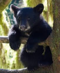 TEDDY - BLACK