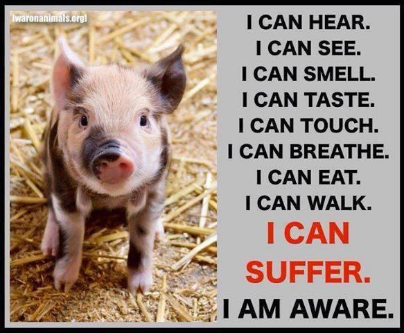 PIG - FEEL