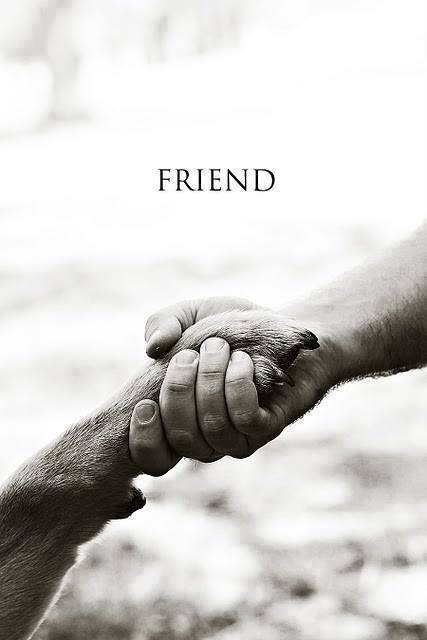 DOG - FRIEND
