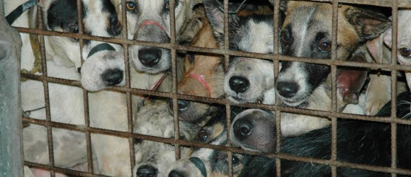 Stop The Dog & Cat Meat Trade - Why Is Toronto