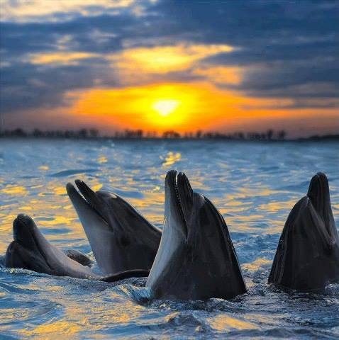 DOLPHINS - 5
