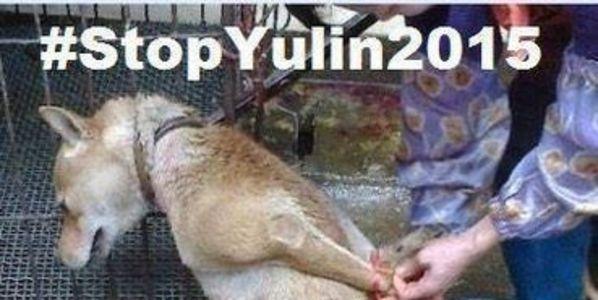 DOG - YULIN 3