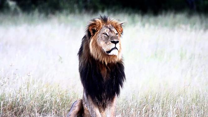 LION - CECIL 2 - rip JULY 2015