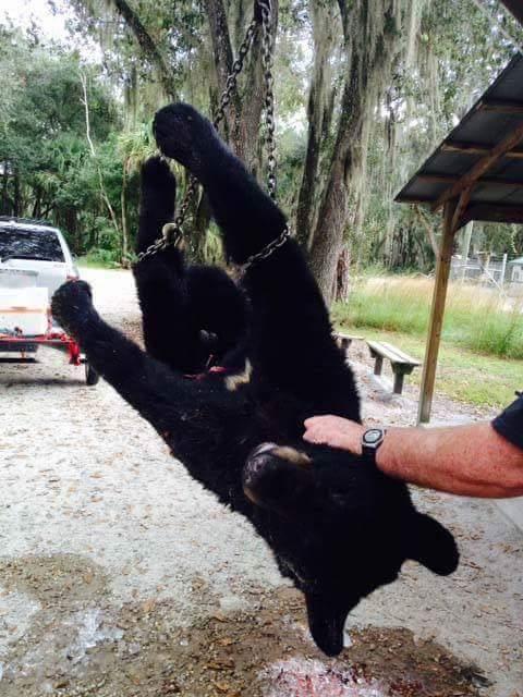 BEAR - FLORIDA - BABY