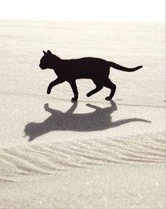 BLACK CAT - WALKING