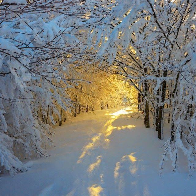 LIGHT - WINTER 6