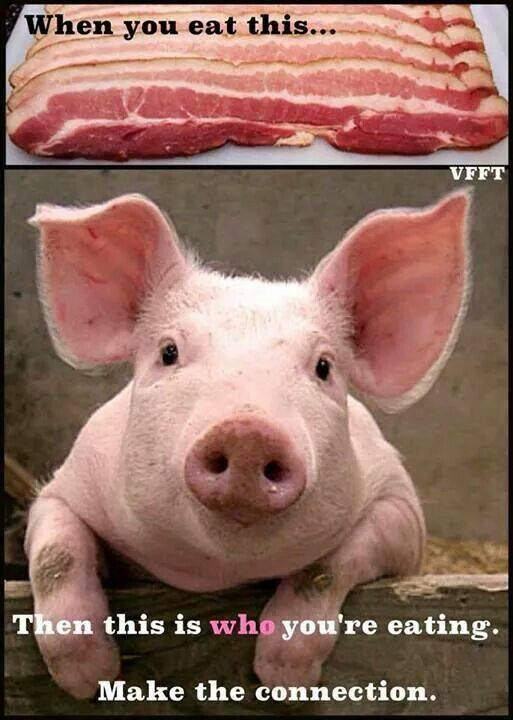 PIG - BACON 4